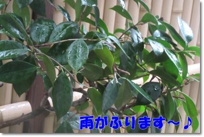 b0167519_215611.jpg
