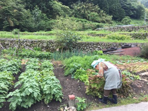 野菜のお裾分け_d0025421_18472385.jpg