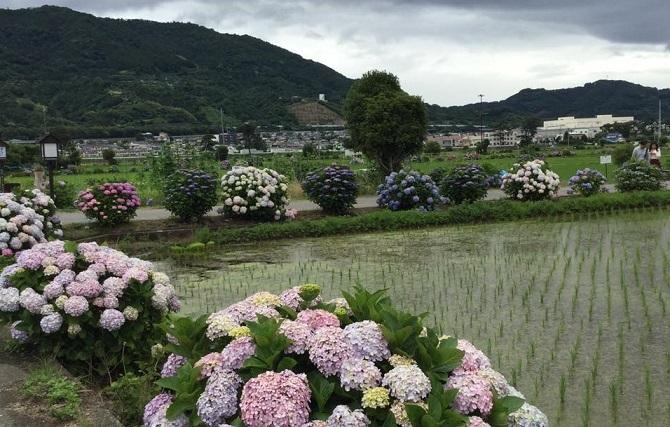 雨上がりの午後のおでかけ_e0071324_18471274.jpg