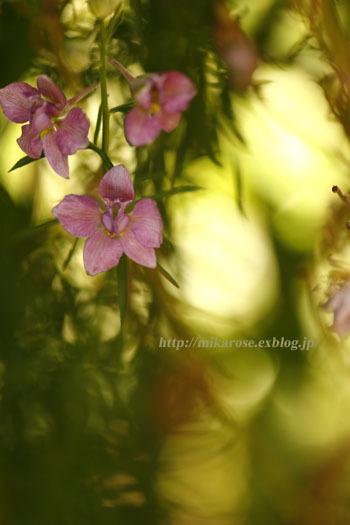 庭の草花とのん気な母_a0264538_11310965.jpg