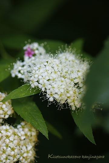 庭の草花とのん気な母_a0264538_11451553.jpg