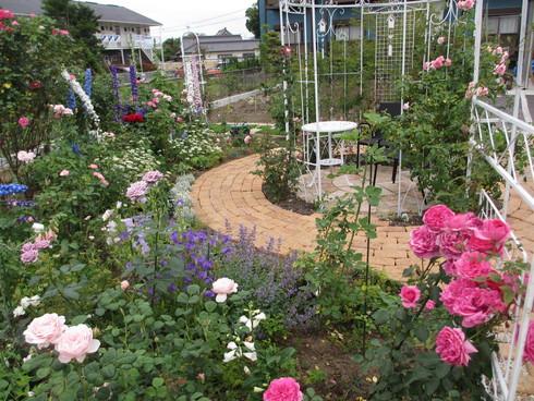淡いピンク色のバラが目立ってきました_a0243064_1117166.jpg
