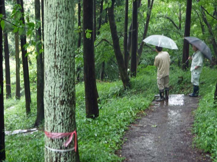 夫婦桜周辺のスギの間伐で六国見山・現地協議6・13_c0014967_17461659.jpg