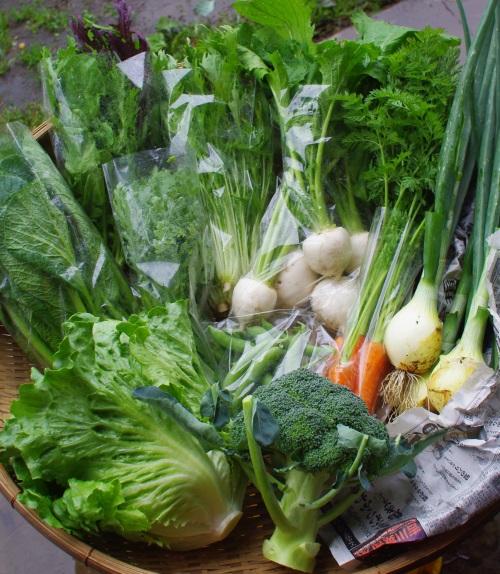 今週の野菜セット(6/14~6/18着)_c0110869_1384576.jpg