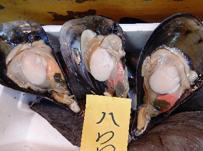 魚河岸シリーズ タイラギ_e0077899_7554199.jpg