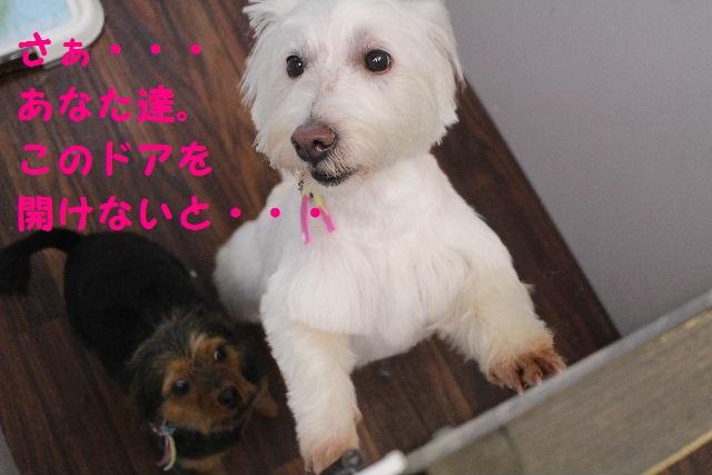 b0130018_21435794.jpg
