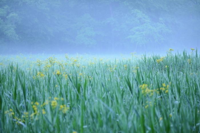 d0349418_16514961.jpg
