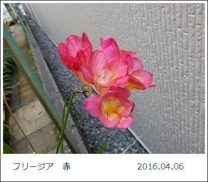 e0033229_1941231.jpg