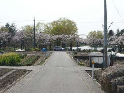 お散歩_c0369433_15504572.jpg