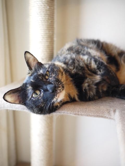 猫のお留守番 ワサビちゃん天ちゃん麦くん茶くん編。_a0143140_22134796.jpg