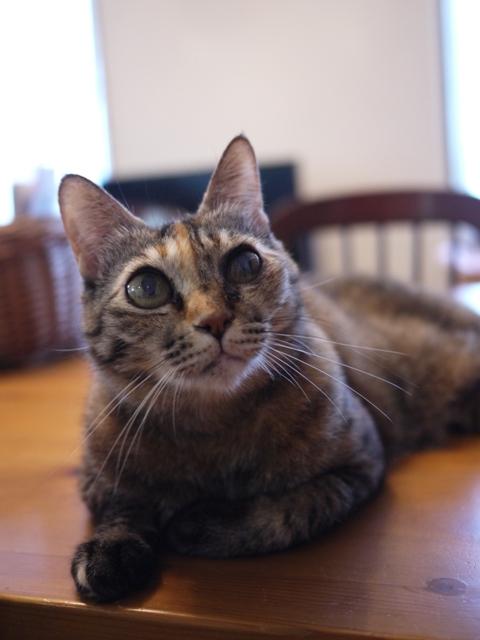 猫のお留守番 ワサビちゃん天ちゃん麦くん茶くん編。_a0143140_22141290.jpg