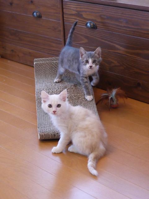 猫のお留守番 ワサビちゃん天ちゃん麦くん茶くん編。_a0143140_22144220.jpg