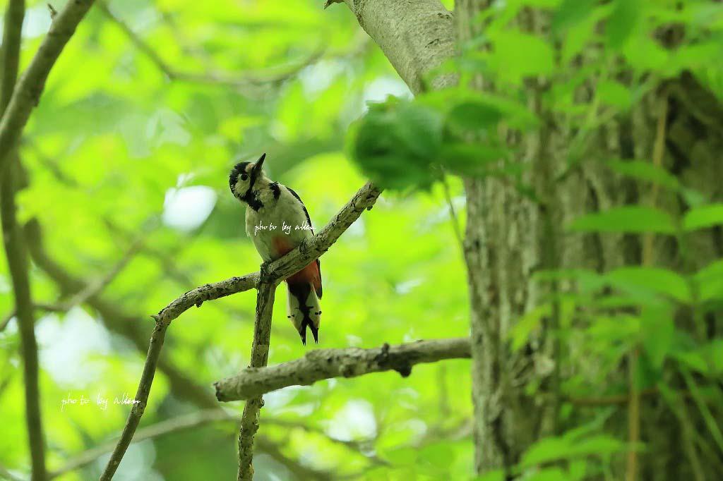道東の子育ての鳥さんより~_a0039860_20181683.jpg