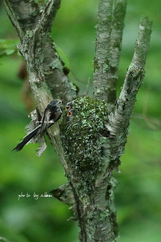 道東の子育ての鳥さんより~_a0039860_20191261.jpg
