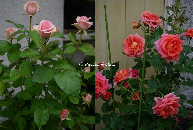 f0330978_12454245.jpg