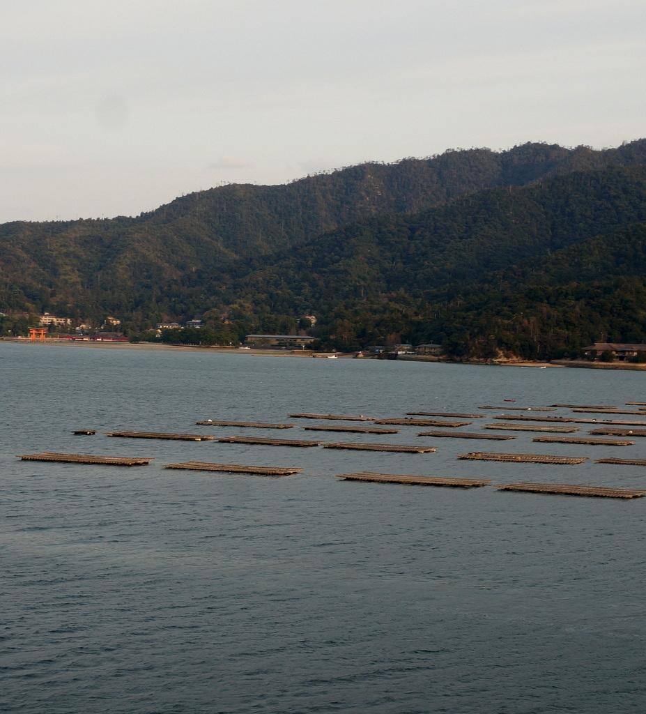 広島、厳島へ。_c0180686_14131638.jpg