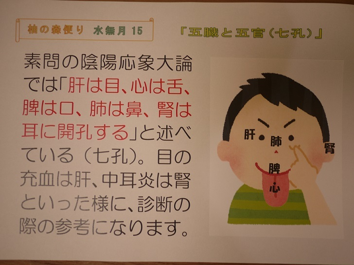 五臓と五官(七孔)_f0354314_10113538.jpg
