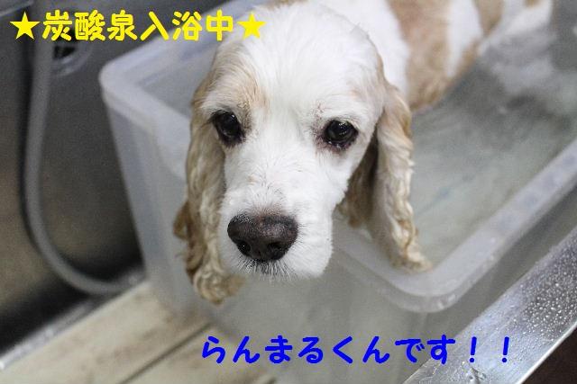 b0130018_755559.jpg