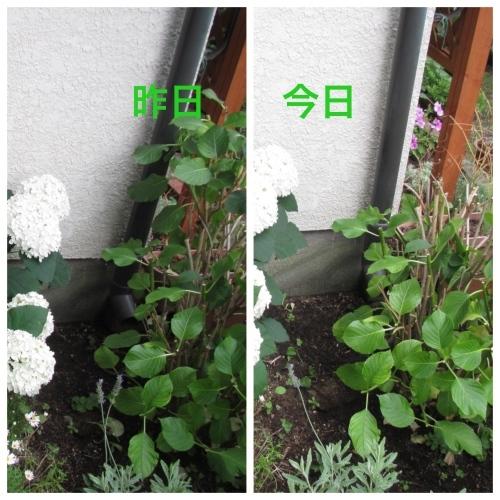 f0299418_17390162.jpg
