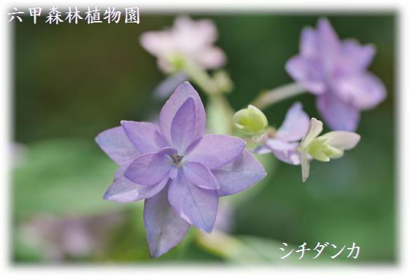 紫陽花撮影会_f0292335_23162313.jpg
