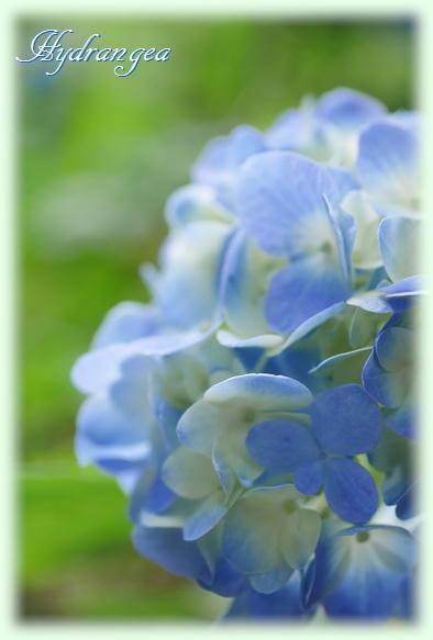 紫陽花撮影会_f0292335_23170334.jpg