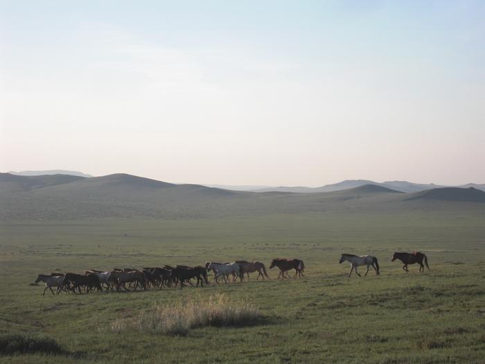 草原の馬の群れ_a0109837_16271669.jpg