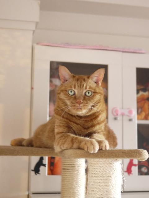 お誕生日猫 しぇる13歳編。_a0143140_23512170.jpg