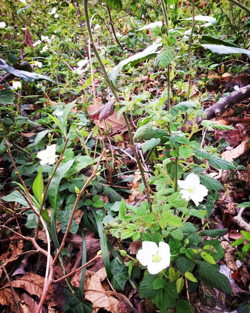 春の植物_a0197647_1214219.jpg