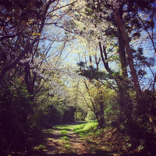 春の景色_a0197647_1216661.jpg