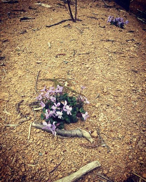 春の植物_a0197647_1222547.jpg