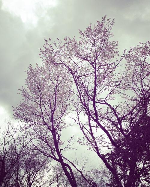 春の植物_a0197647_1224445.jpg
