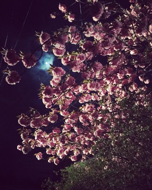 夜桜_a0197647_12314816.jpg