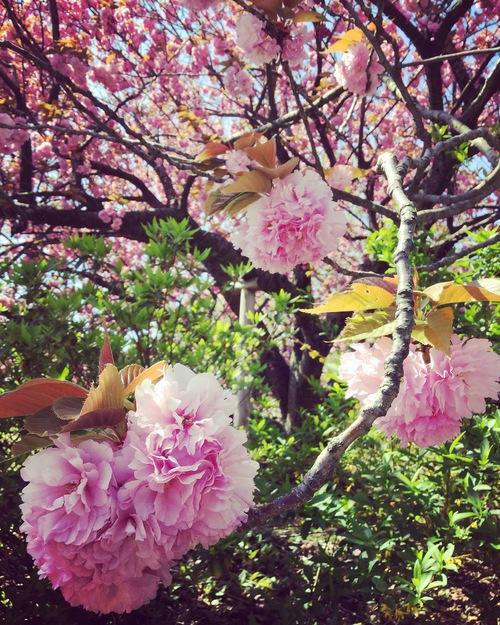 春の植物_a0197647_12341841.jpg