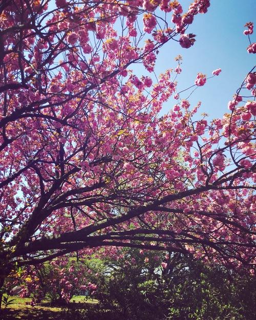 春の植物_a0197647_12343638.jpg