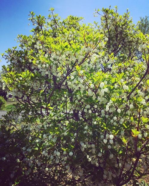 春の植物_a0197647_12345693.jpg