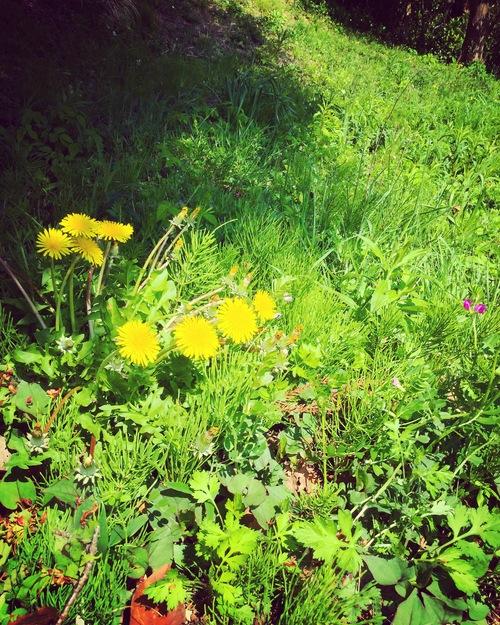 春の植物_a0197647_12352565.jpg