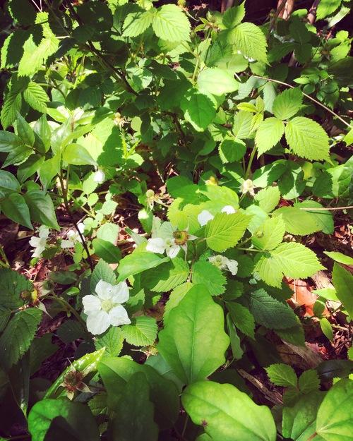 春の植物_a0197647_12355989.jpg