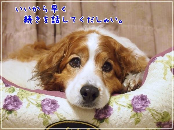 d0013149_00011020.jpg