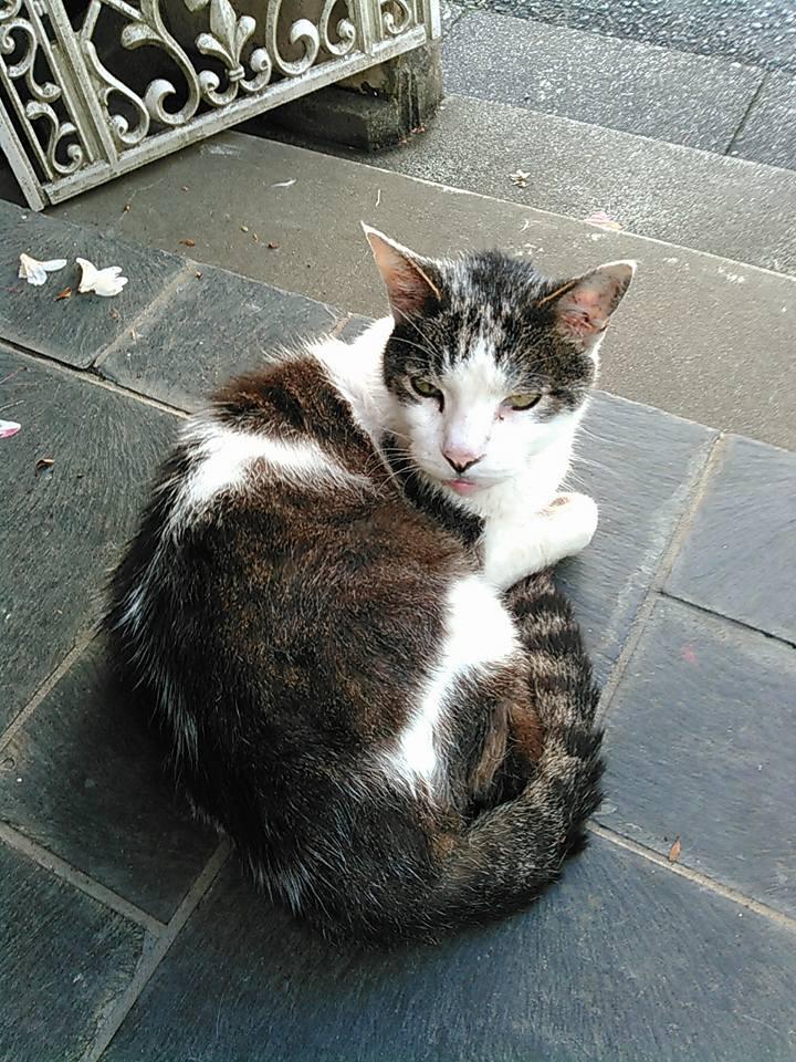 【猫】元気になった?_f0141609_2317752.jpg