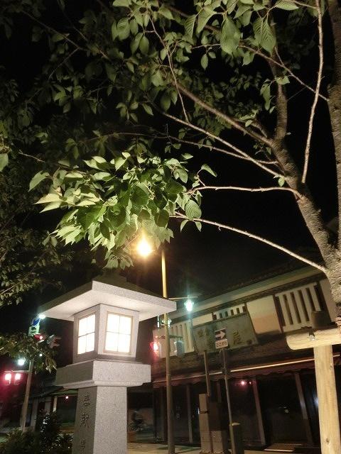初めての鎌倉  鶴岡八幡宮の参道「若宮大路」とにぎわう「小町通り」_f0141310_711489.jpg
