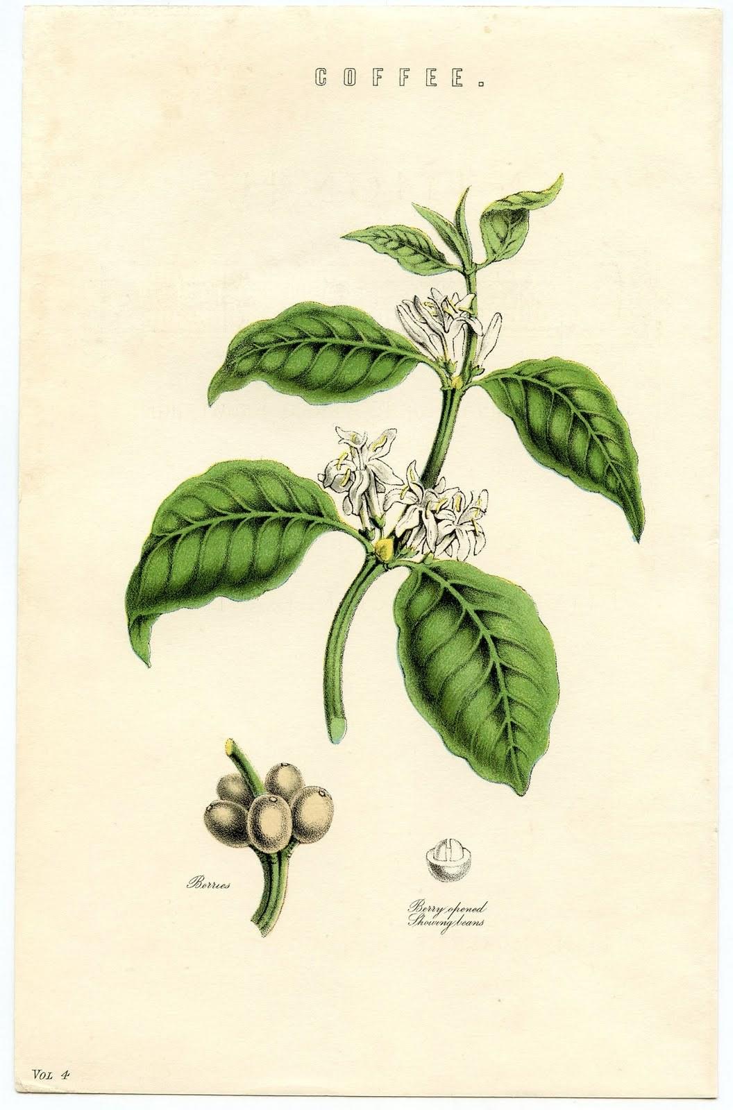 雨降りなのでネット美術館で古い植物画鑑賞_c0025115_22263884.jpg