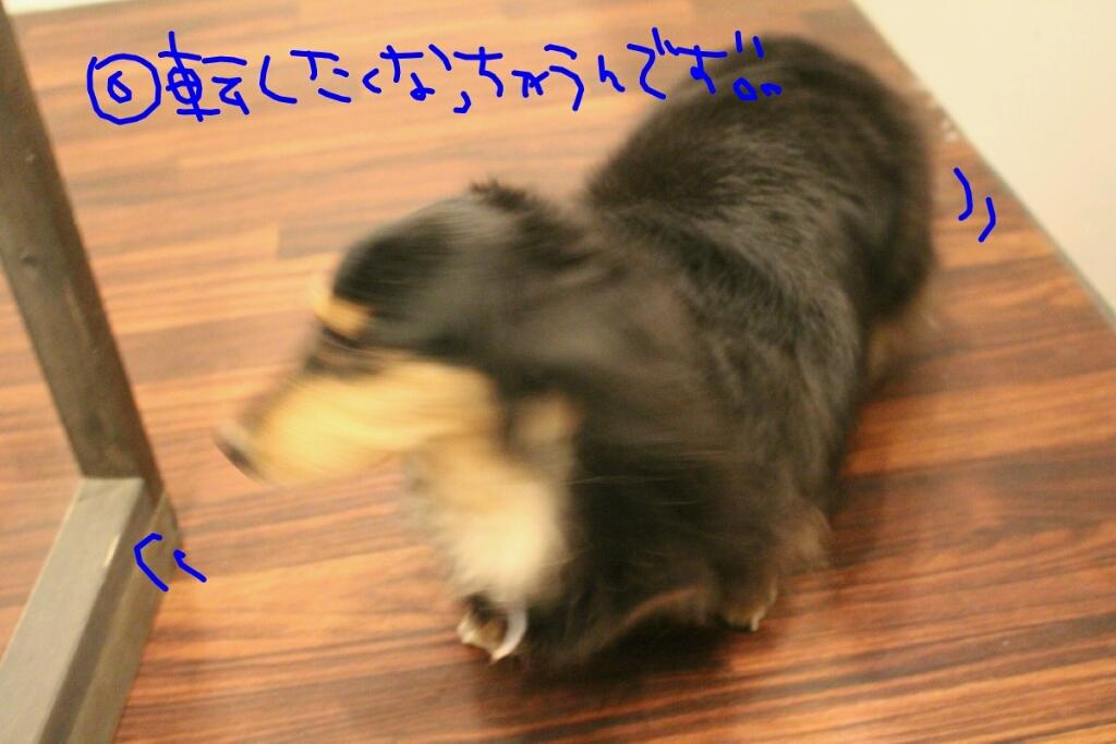 b0130018_09513759.jpg