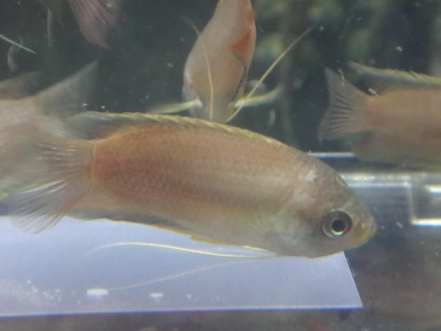 160616 熱帯魚・水草・観葉植物_f0189122_14521434.jpg
