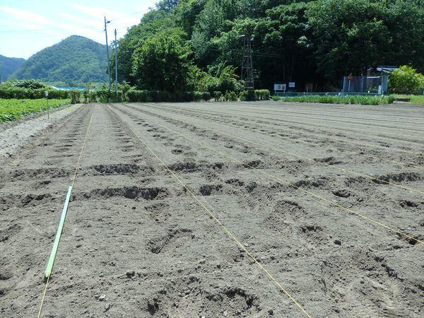 まめつぶ農園2016 Vol.7黒豆の種まき_b0206037_08362634.jpg