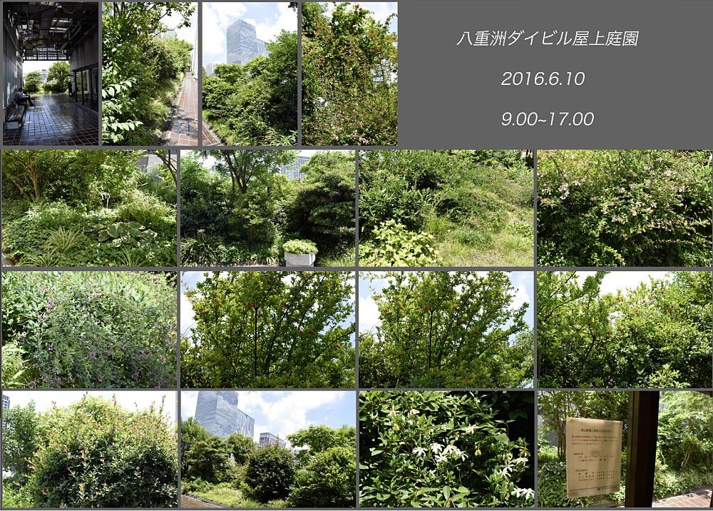 f0103459_7305186.jpg