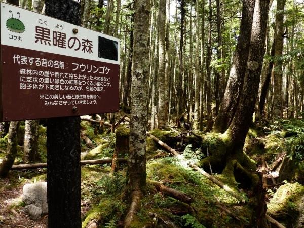 続・北八ヶ岳 苔の森_a0351368_00333630.jpg