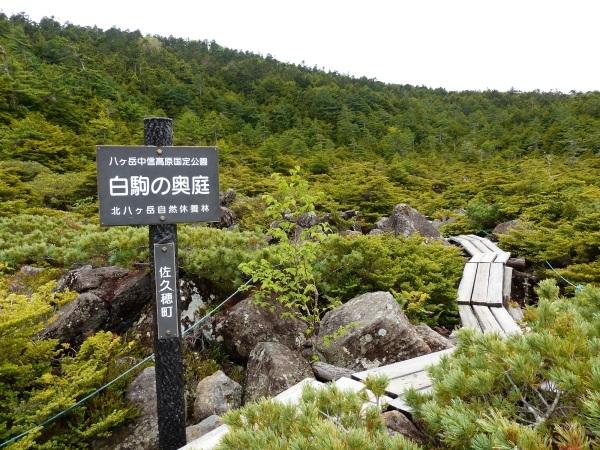 続・北八ヶ岳 苔の森_a0351368_00350207.jpg