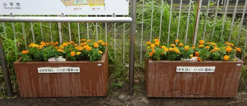小川駅西口プランター花植替え_f0059673_23082757.jpg