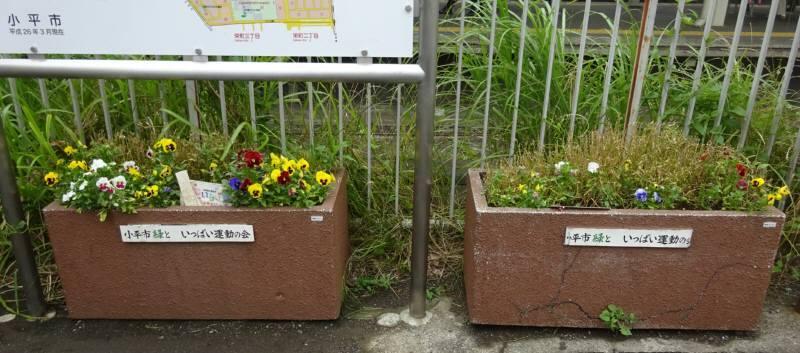 小川駅西口プランター花植替え_f0059673_23085596.jpg