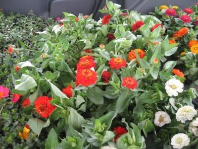 ガーデンふ頭総合案内所前花壇の植替えH28.6.15_d0338682_11312561.jpg